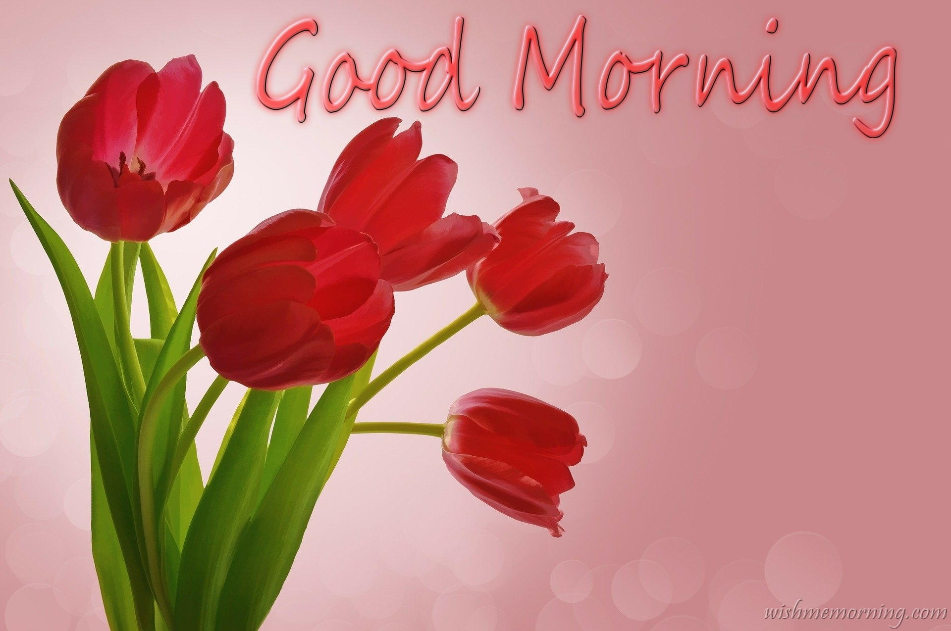 Five Red Tulip Flowers Good Morning Wish