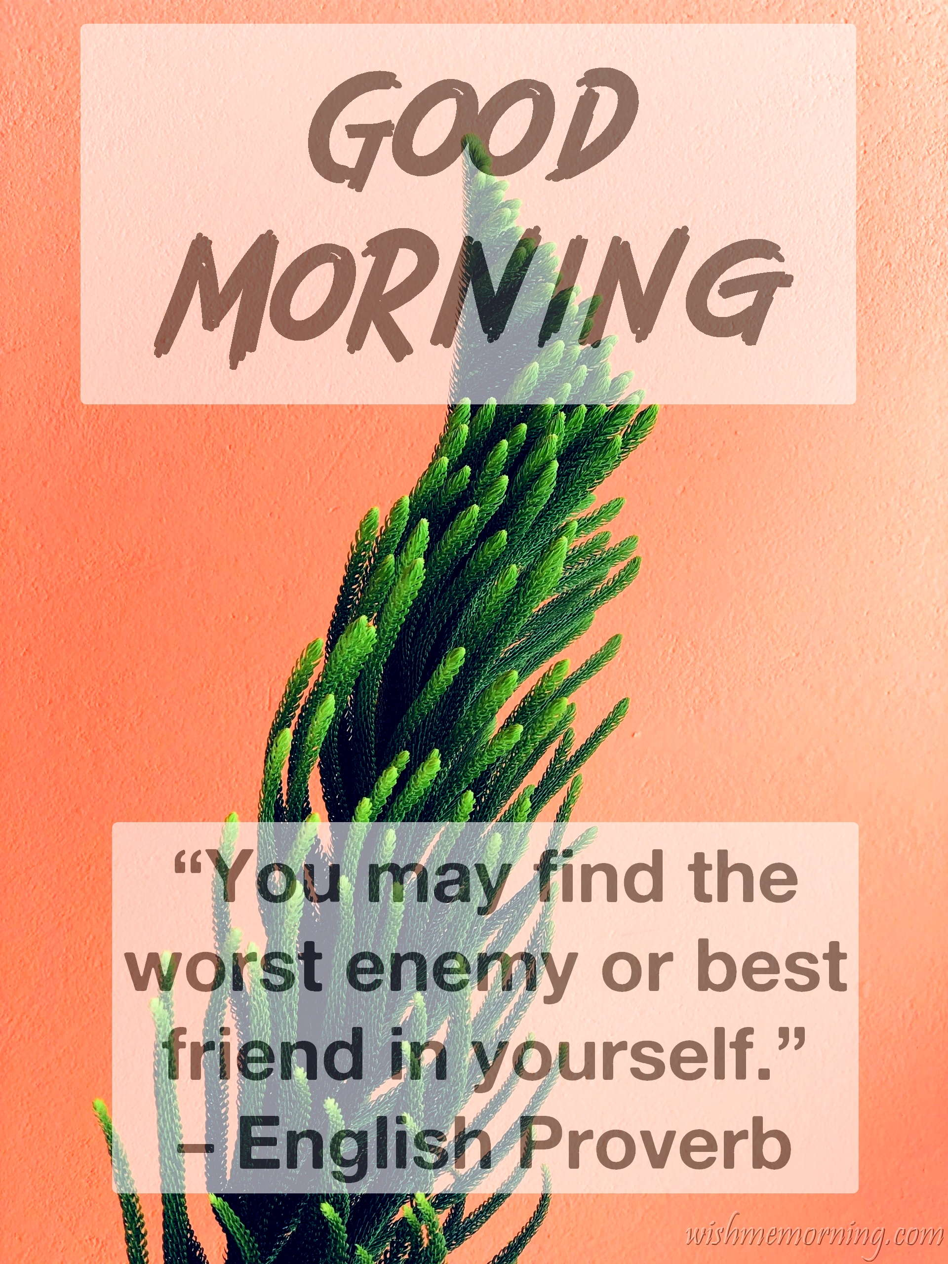 Good Morning Quote English Proverb Plants Background