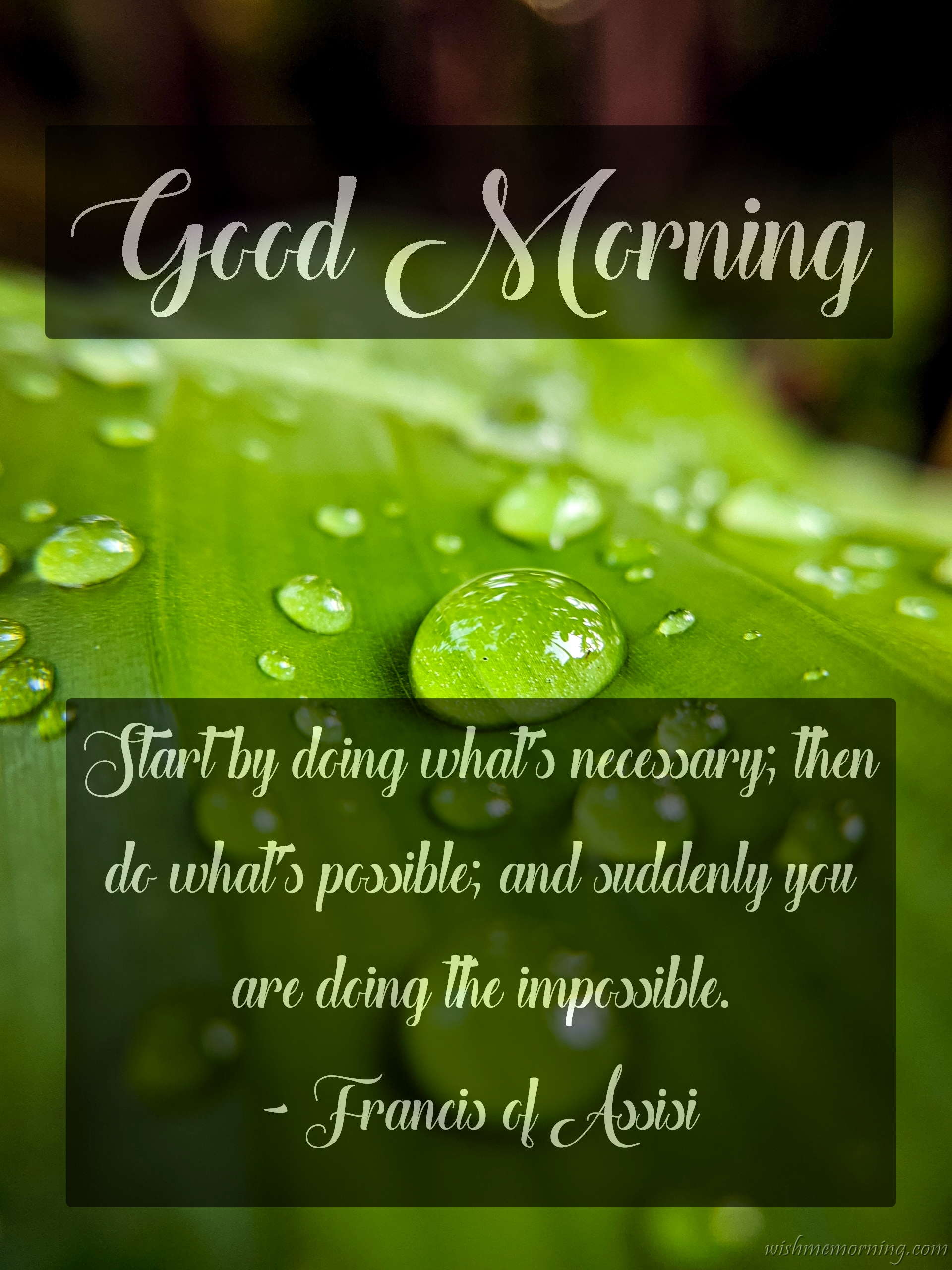 Good Morning Quote Francis of Assisi Plants Background