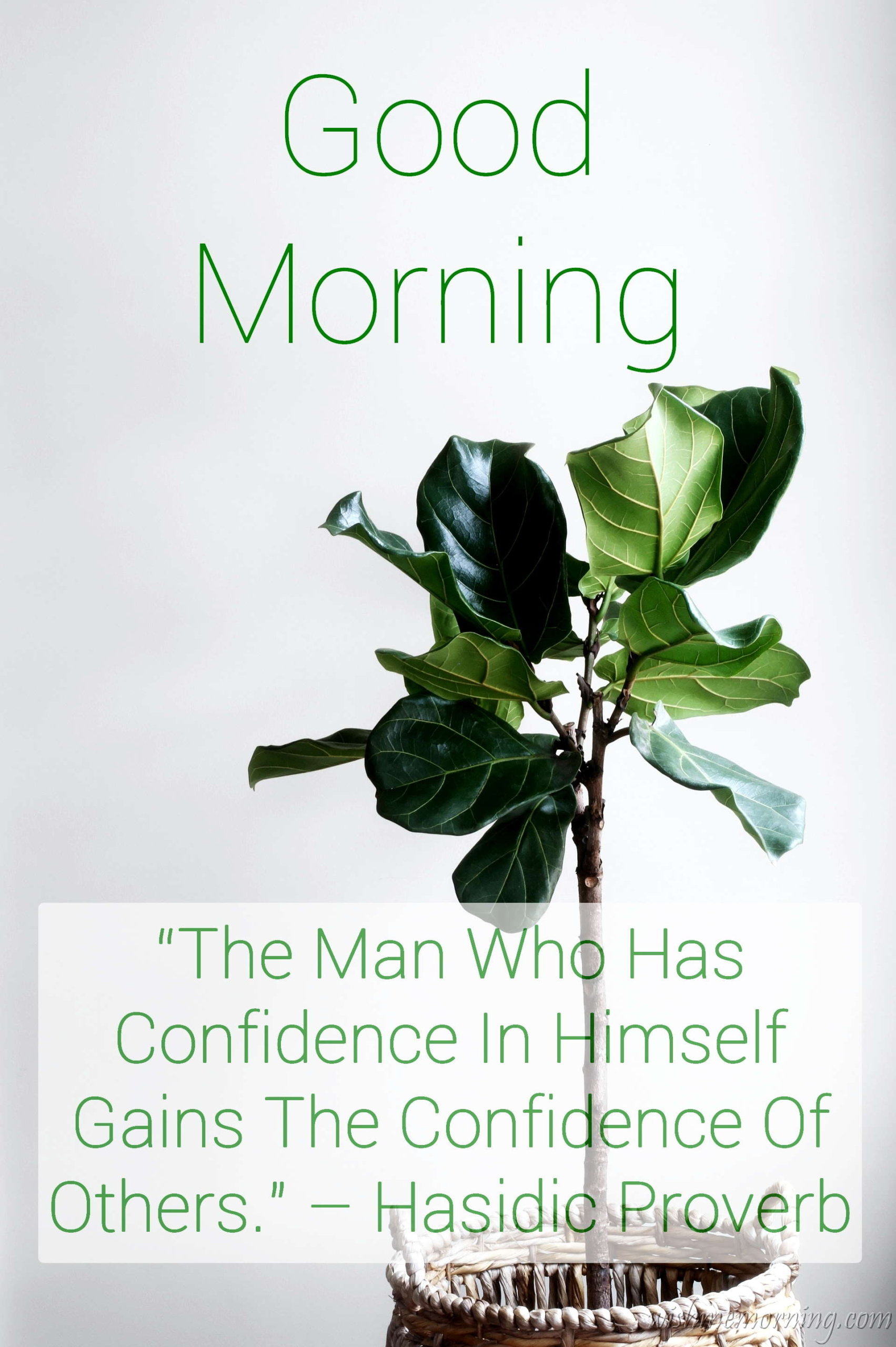 Good Morning Quote Hasidic Proverb Plants Background