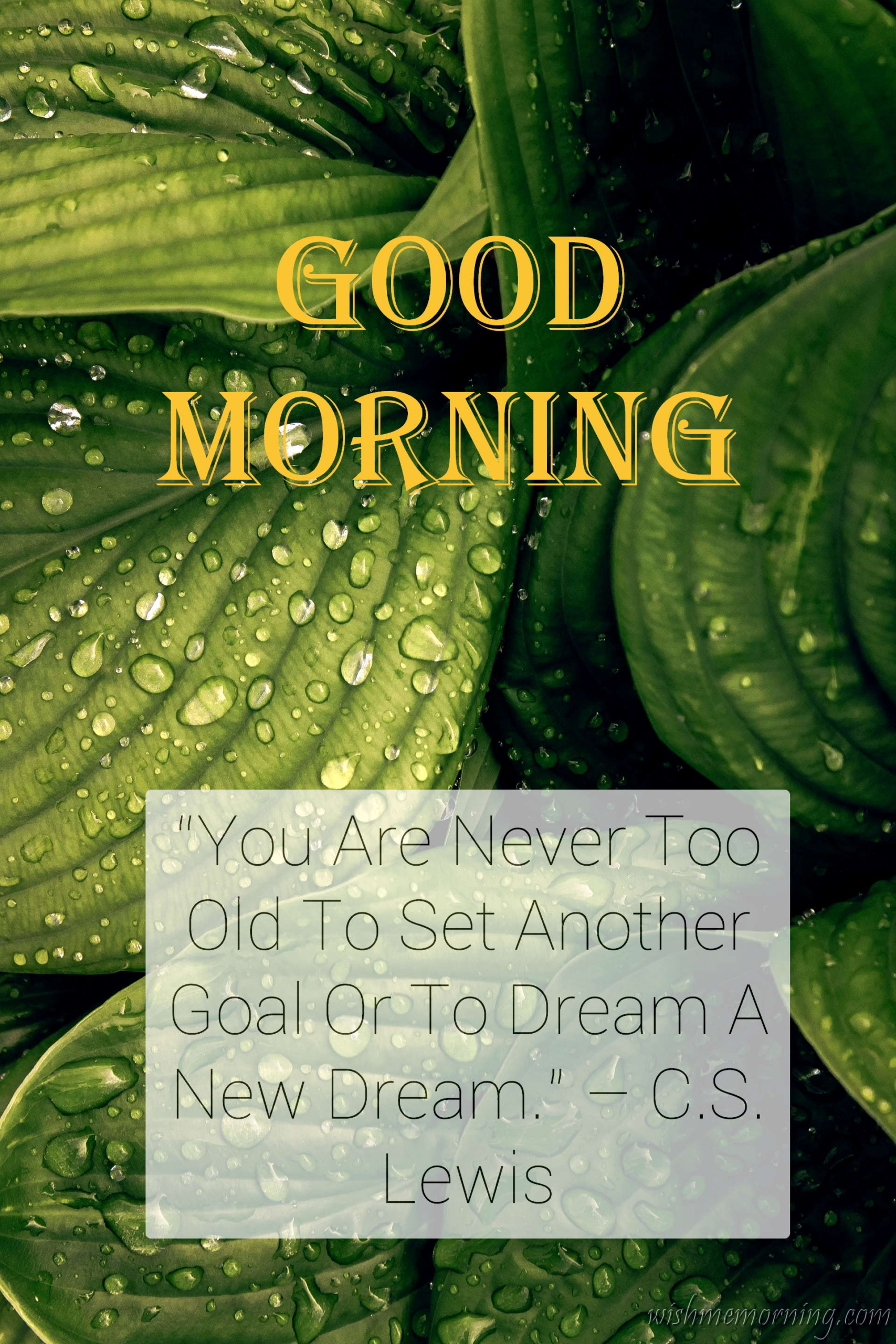 Good Morning Quote Helen C.S. Lewis Background