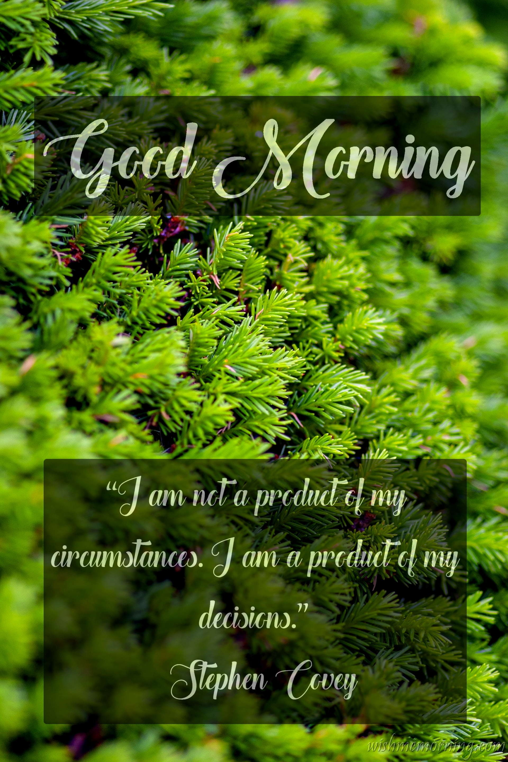 Good Morning Quote Stephen Covey Plants Background