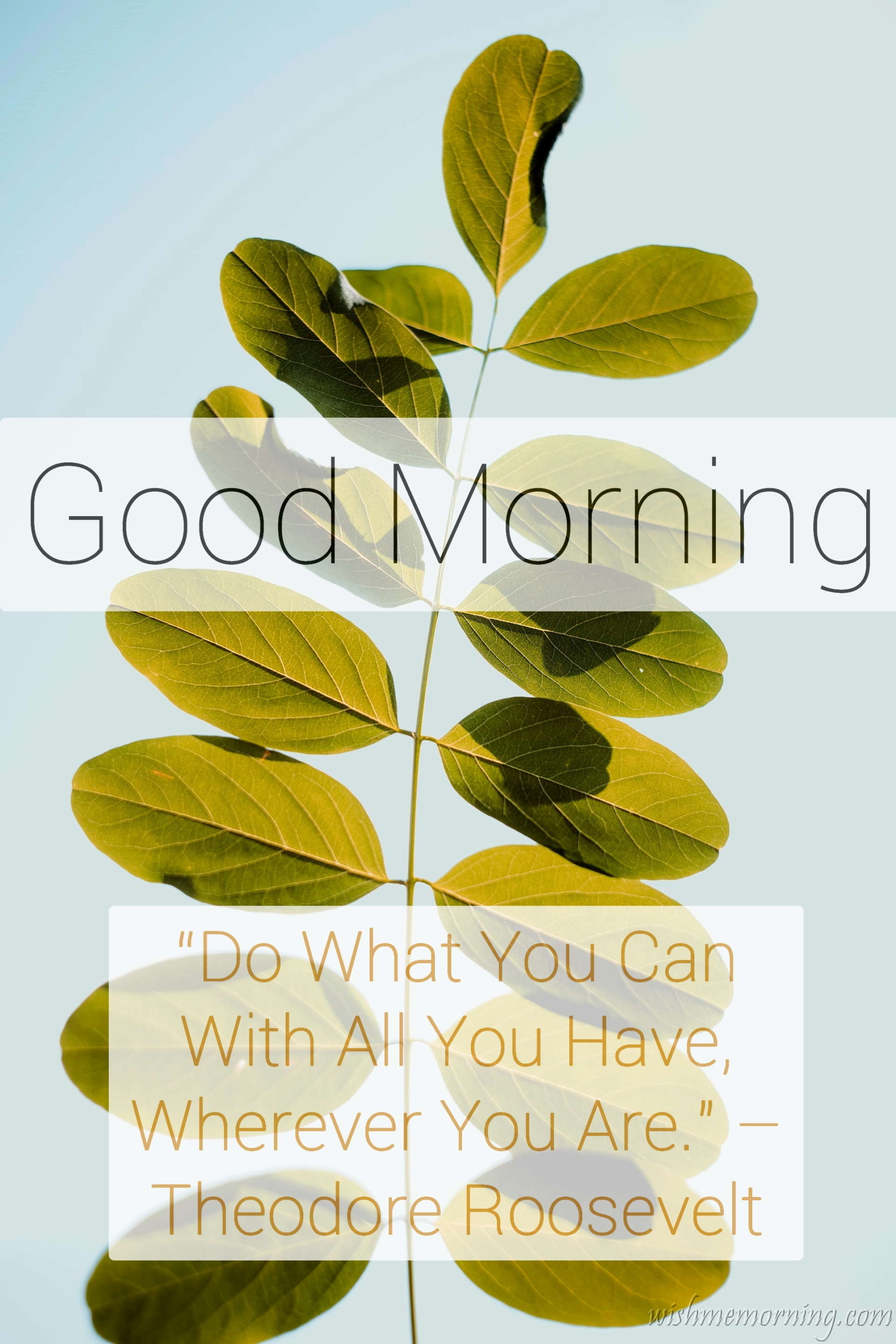 Good Morning Quote Theodore Roosevelt Plants Background