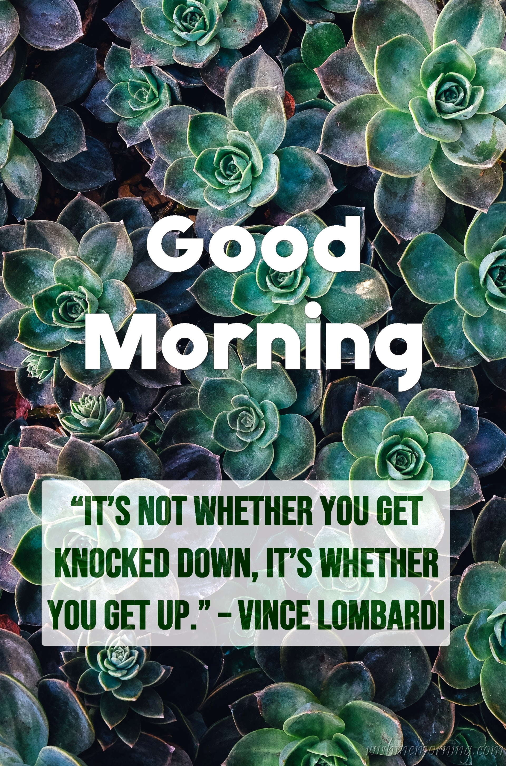 Good Morning Quote Vince Lombardi Plants Background