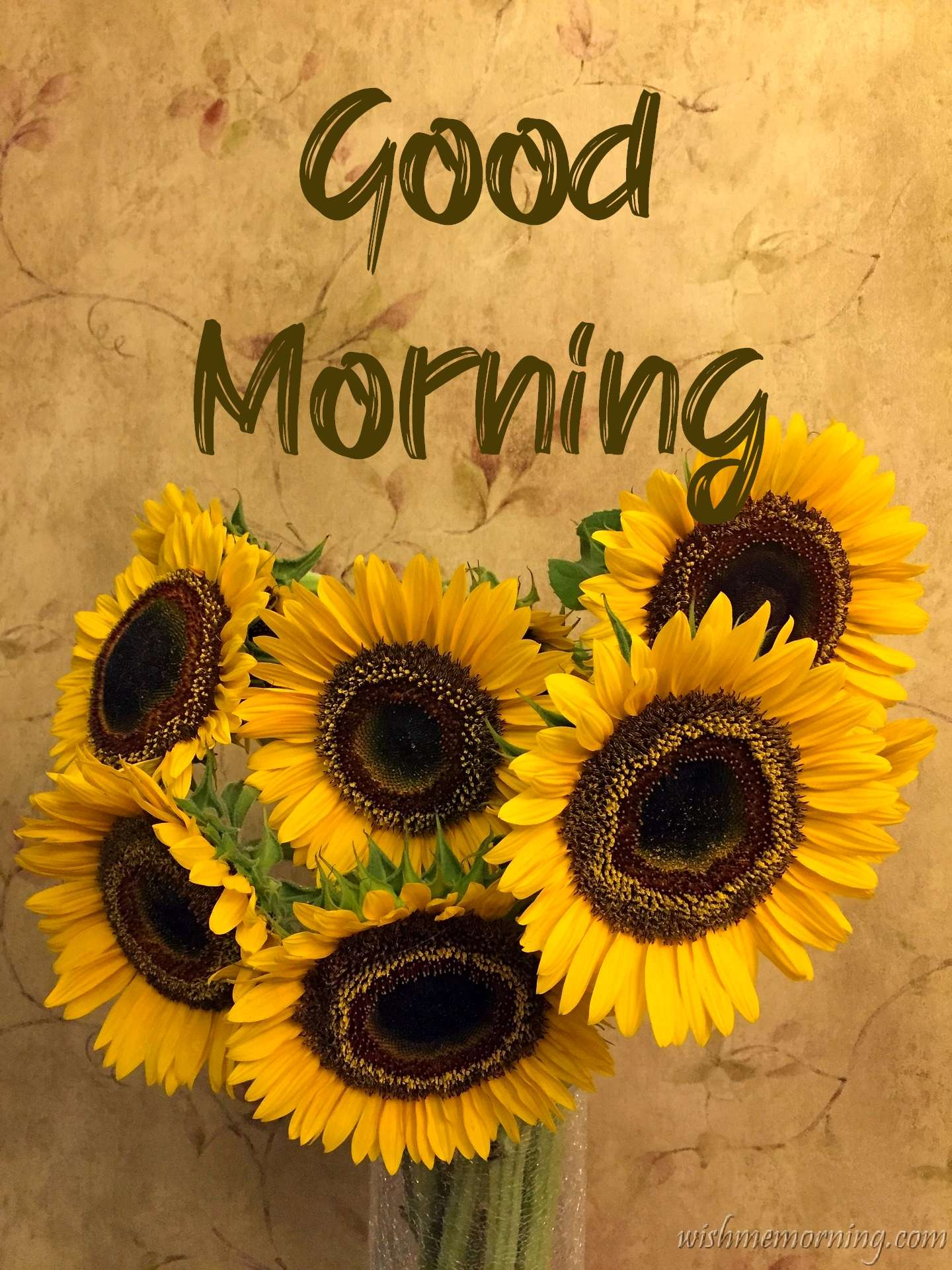 Six Yellow Sunflowers Wrapped Good Morning Image