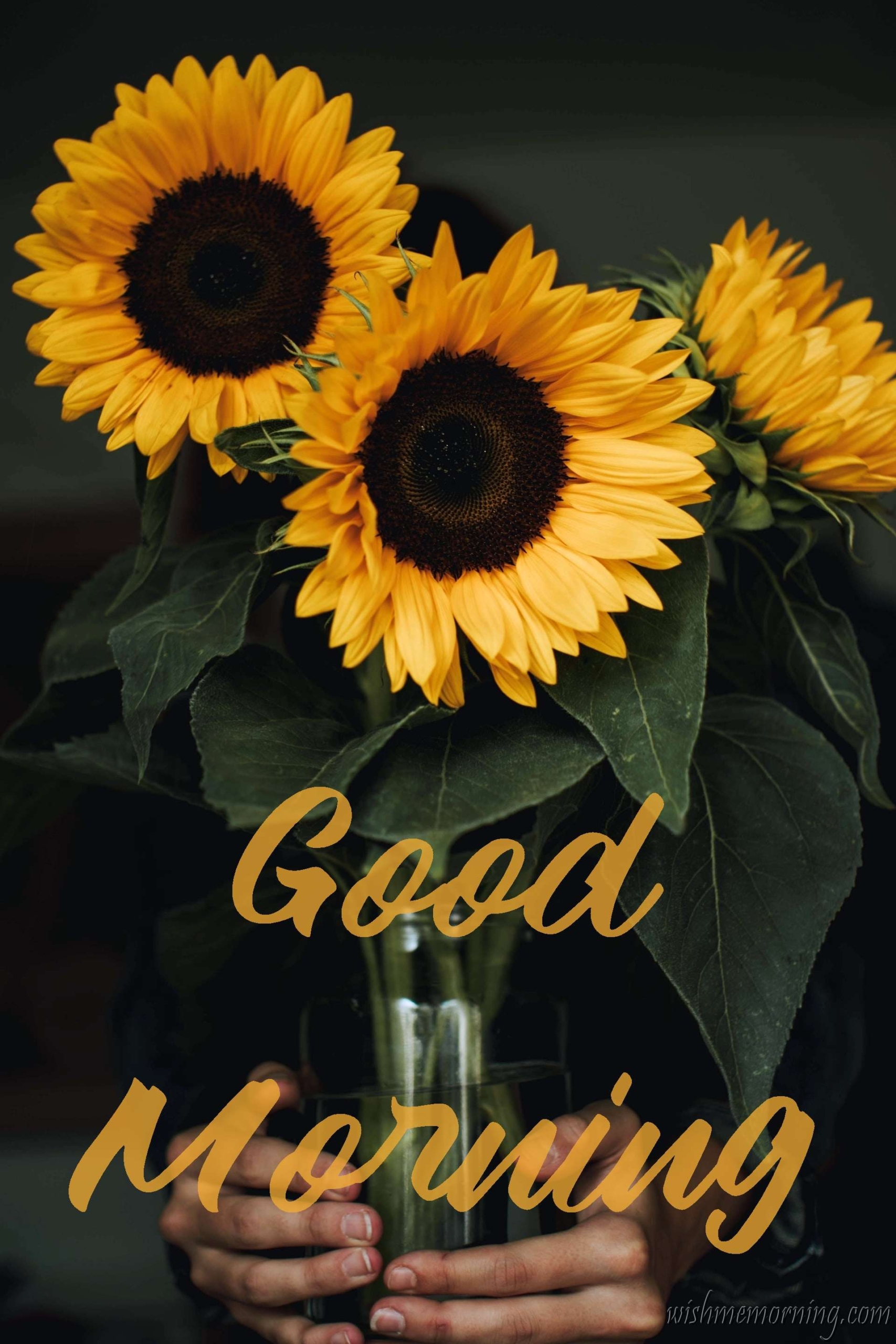 Three Yellow Sunflowers in Glass Holding Hands Good Morning Image