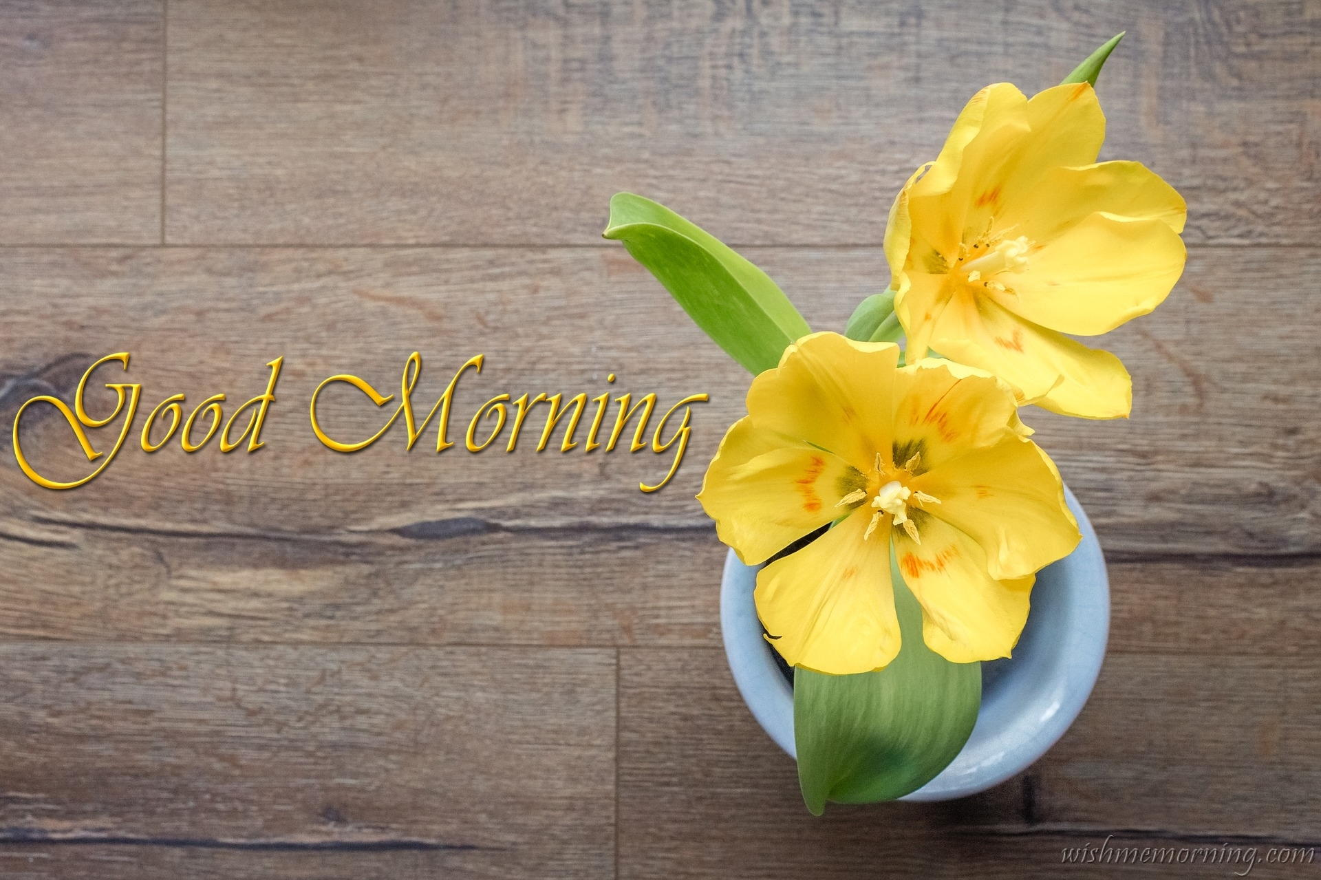 Two Yellow Tulip Flowers in A Cup Good Morning Wish