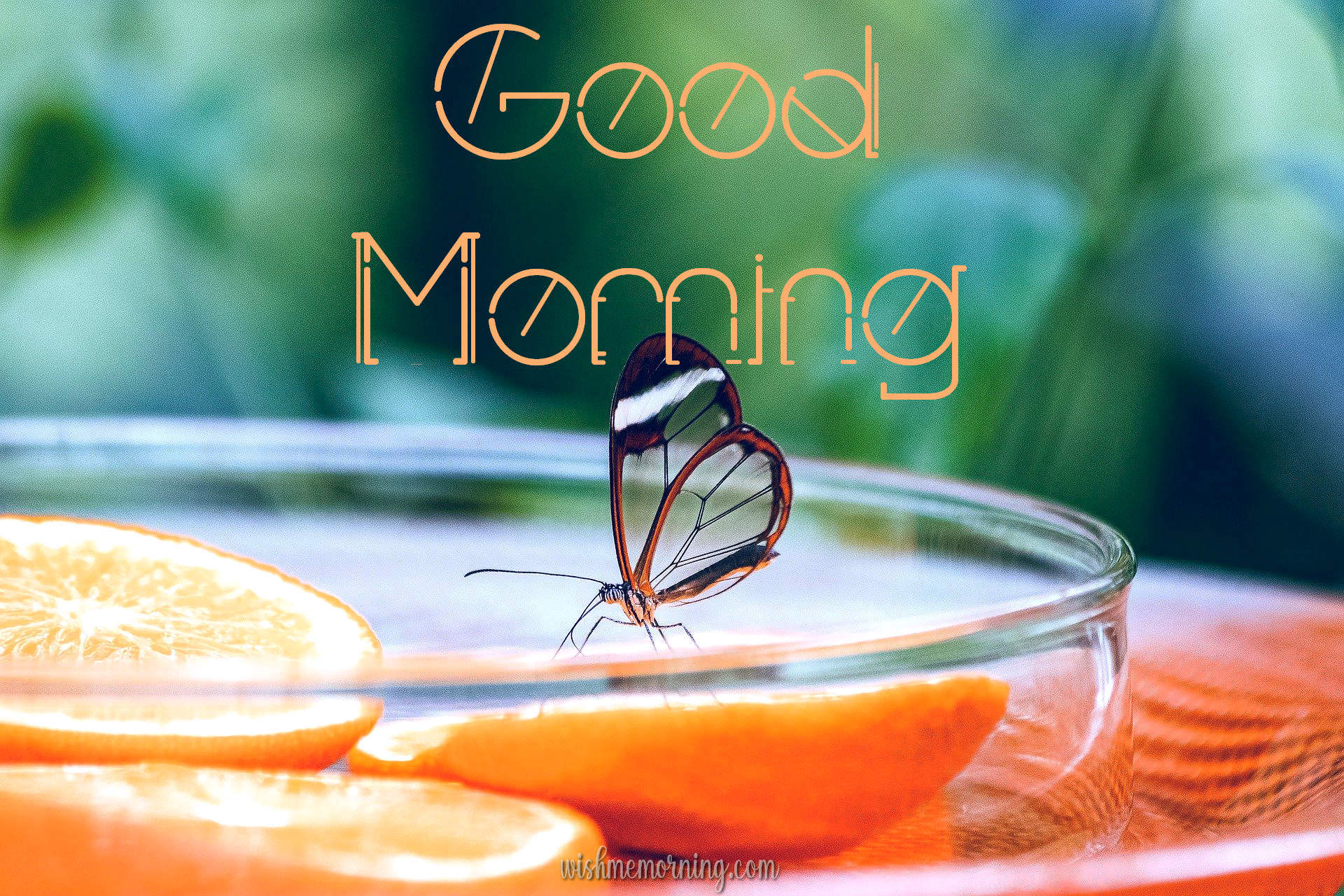 Beautiful Butterfly Good Morning Images wishmemorning.com 11
