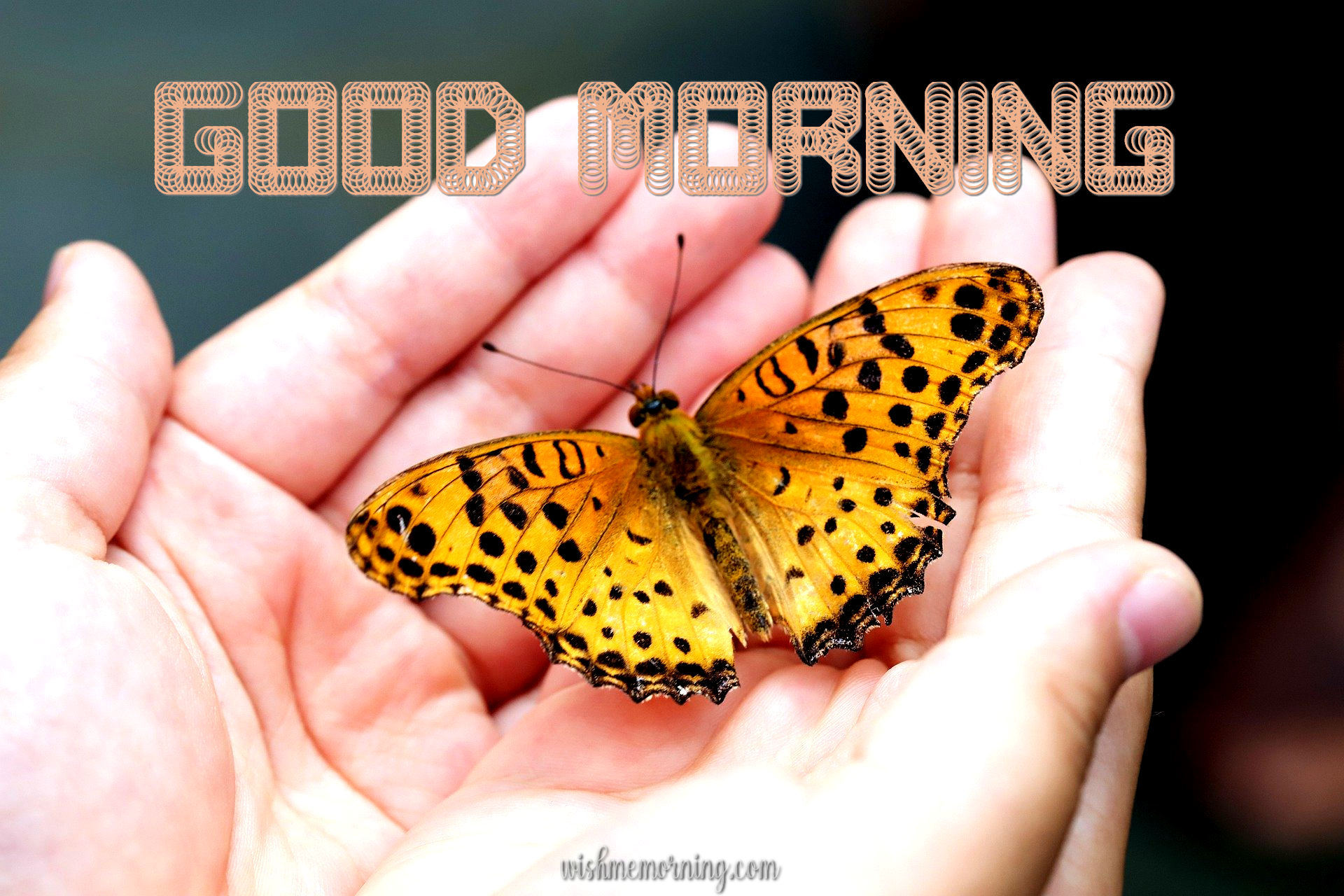 Beautiful Butterfly Good Morning Images wishmemorning.com 13