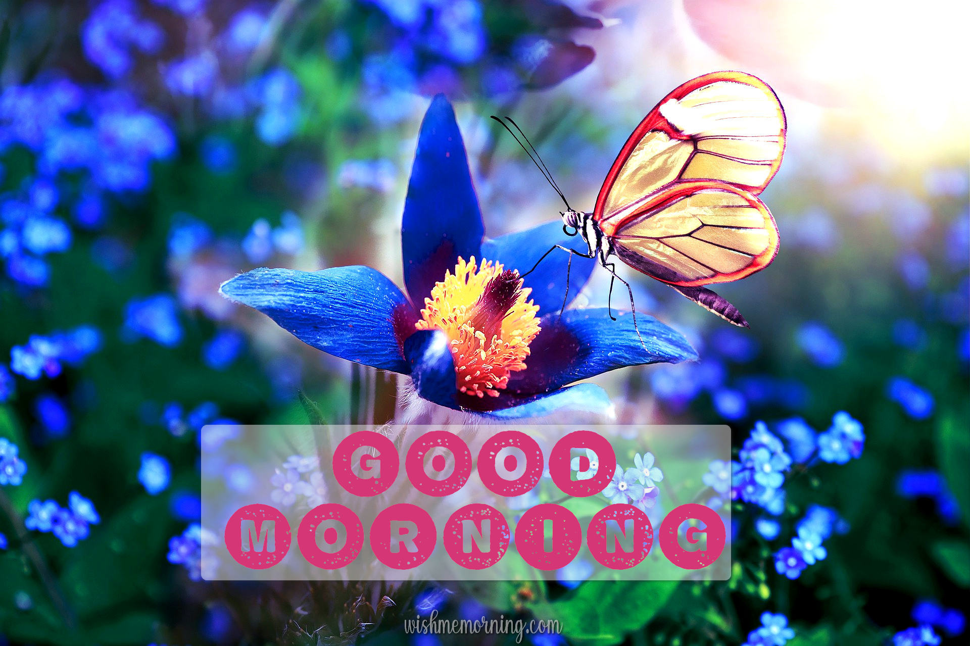 Beautiful Butterfly Good Morning Images wishmemorning.com 15