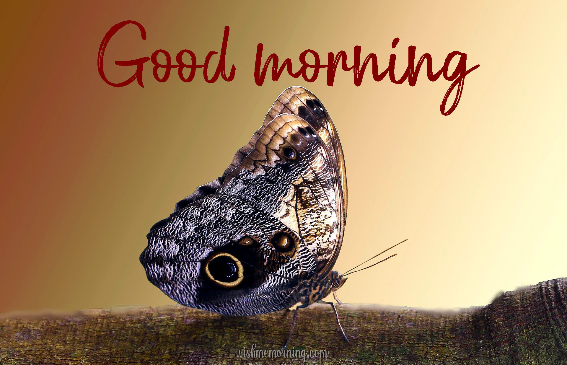 Beautiful Butterfly Good Morning Images wishmemorning.com 18