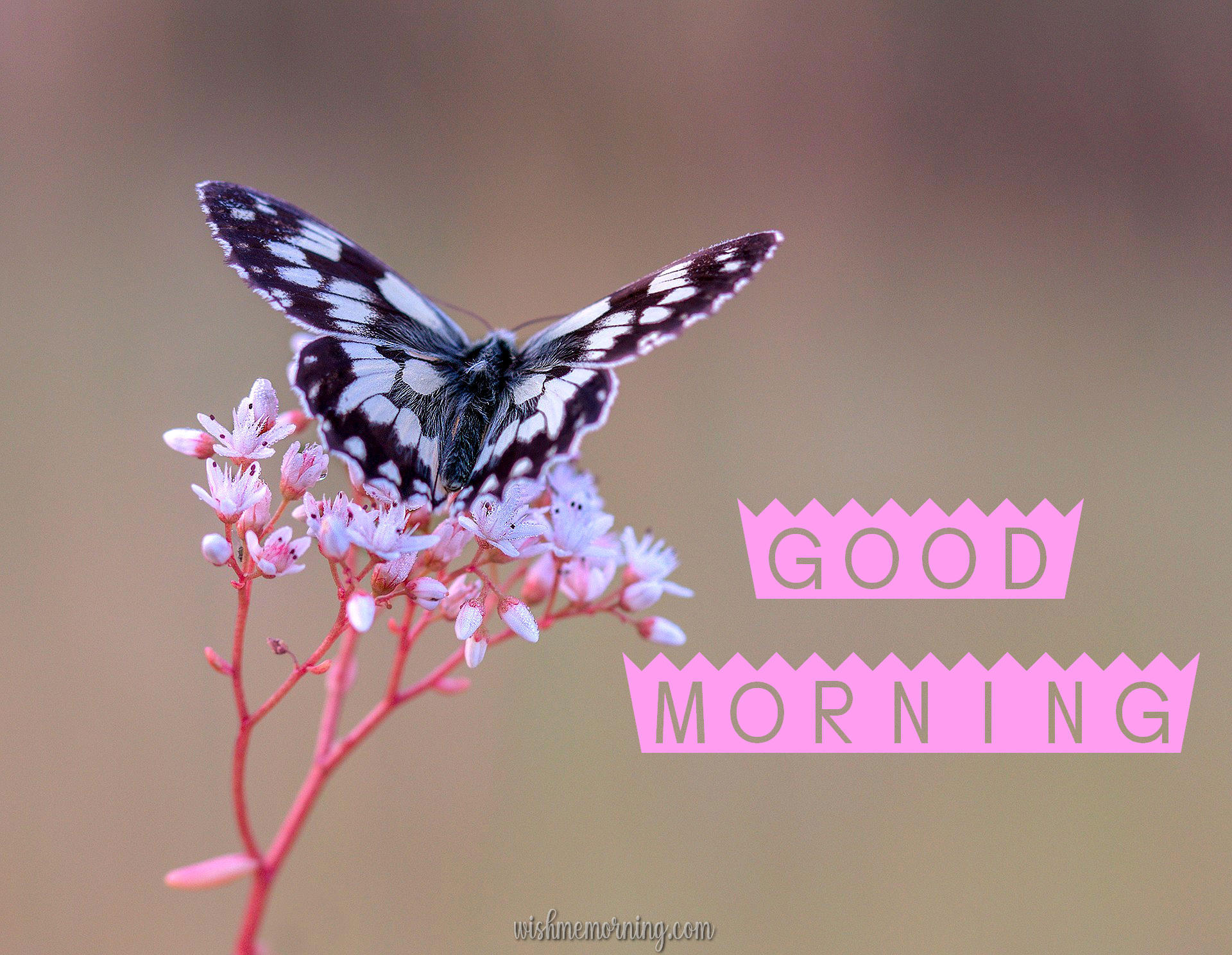 Beautiful Butterfly Good Morning Images wishmemorning.com 19