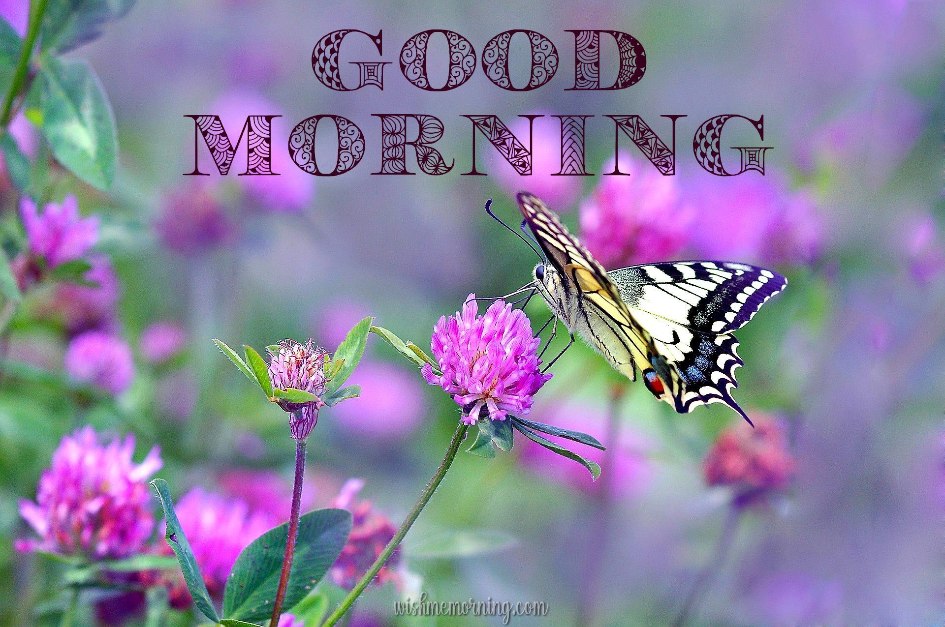 Beautiful Butterfly Good Morning Images wishmemorning.com 20