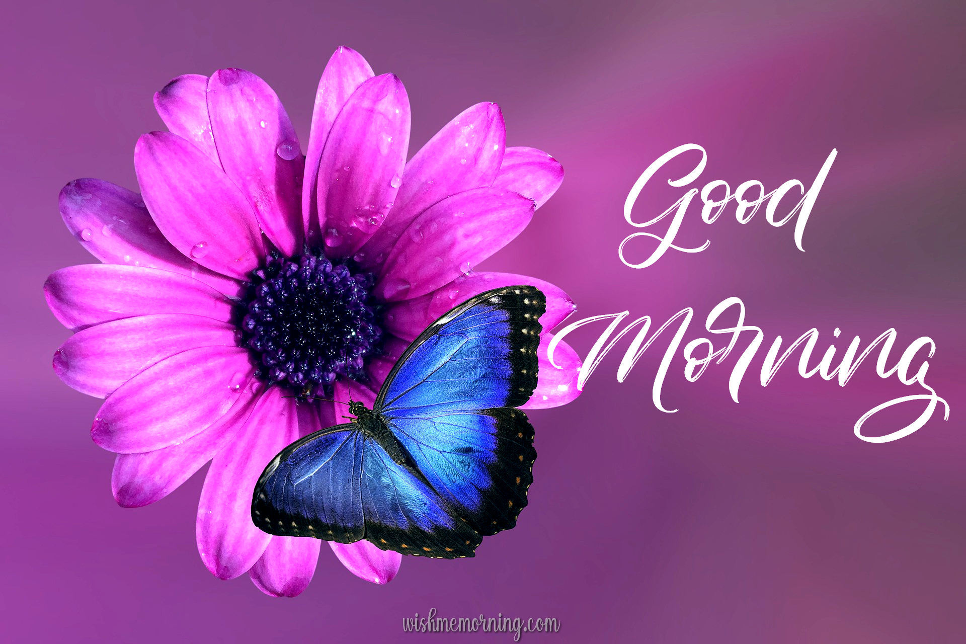 Beautiful Butterfly Good Morning Images wishmemorning.com 21
