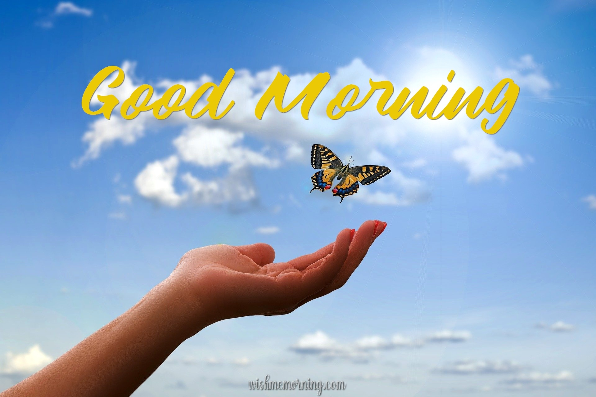Beautiful Butterfly Good Morning Images wishmemorning.com 22
