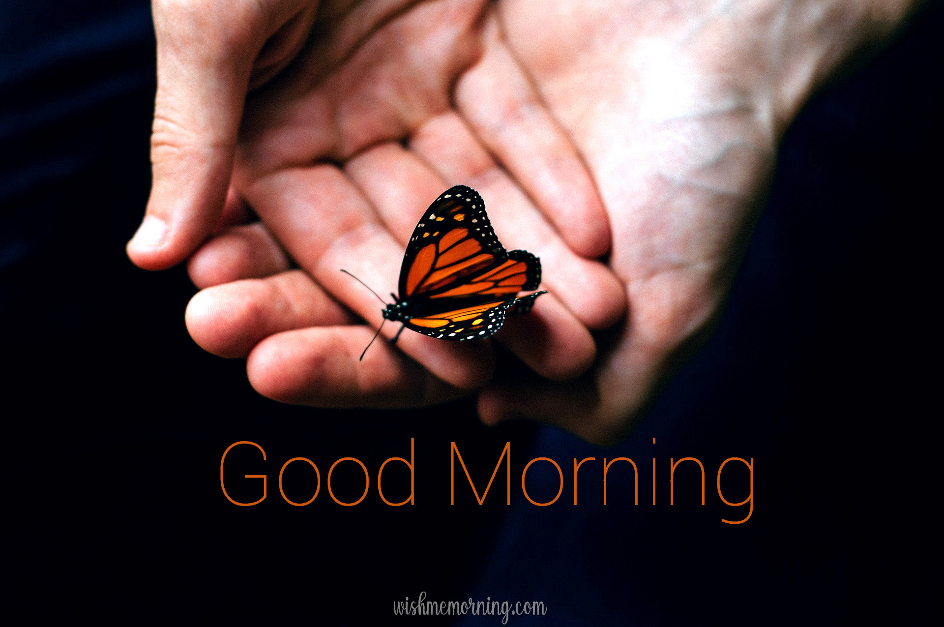 Beautiful Butterfly Good Morning Images wishmemorning.com 24
