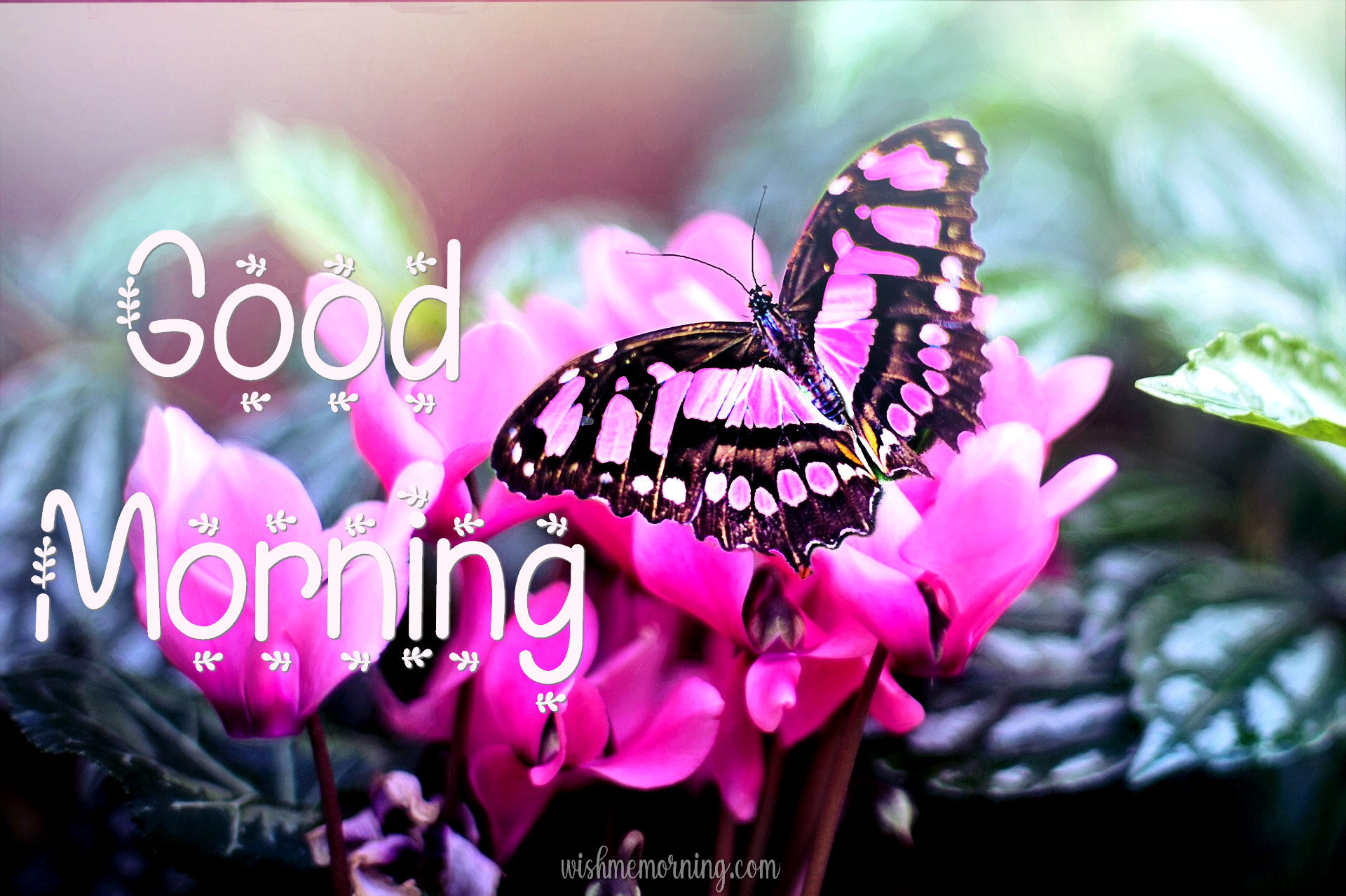 Beautiful Butterfly Good Morning Images wishmemorning.com 25