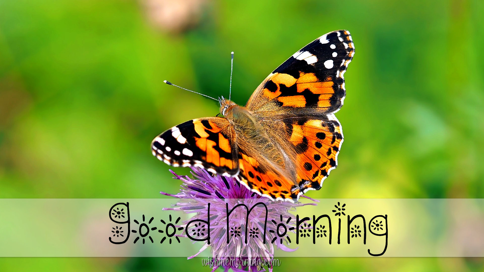 Beautiful Butterfly Good Morning Images wishmemorning.com 4