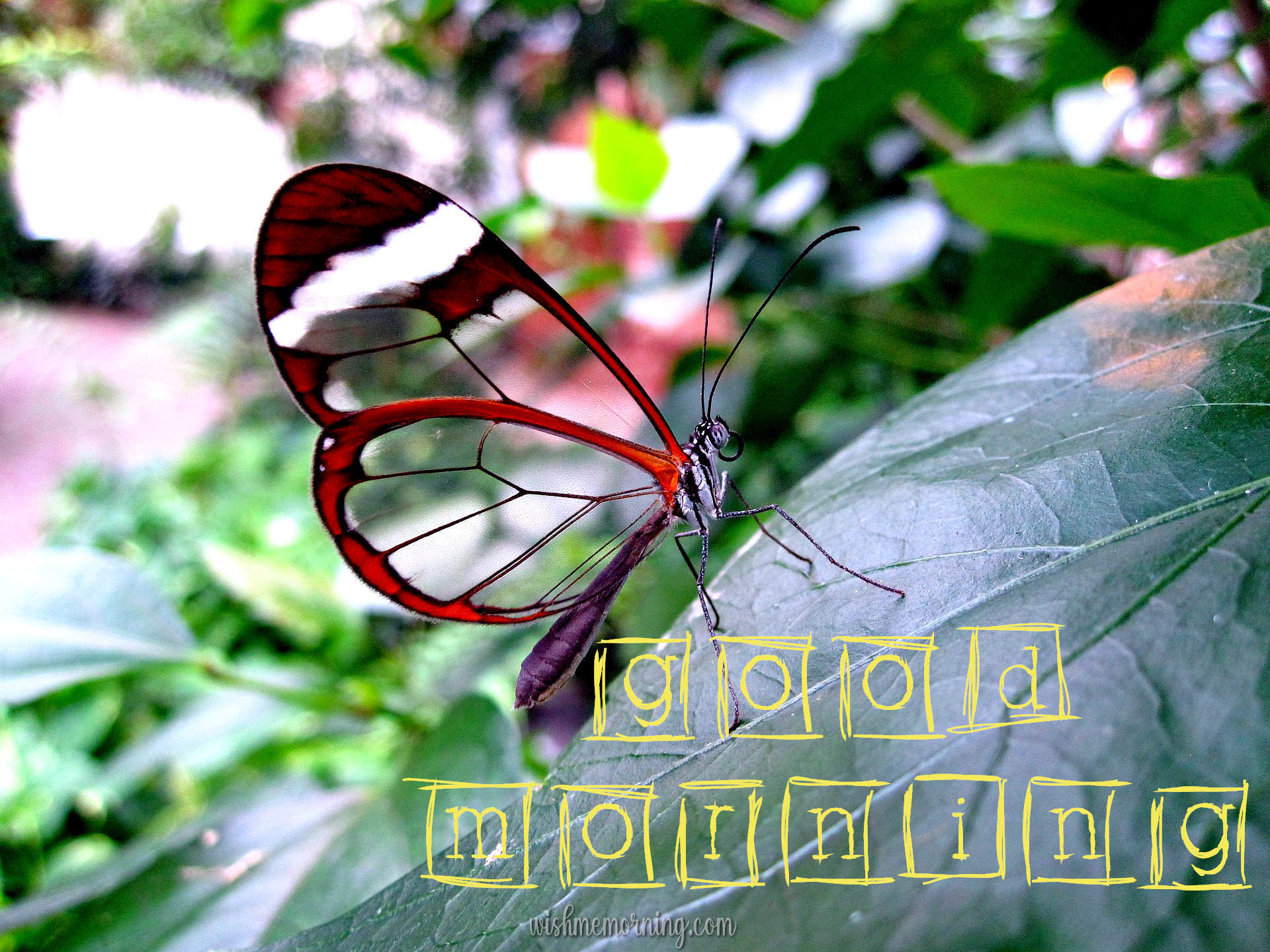 Beautiful Butterfly Good Morning Images wishmemorning.com 6