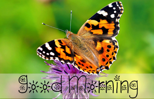 Featured Image Butterfly Post 2