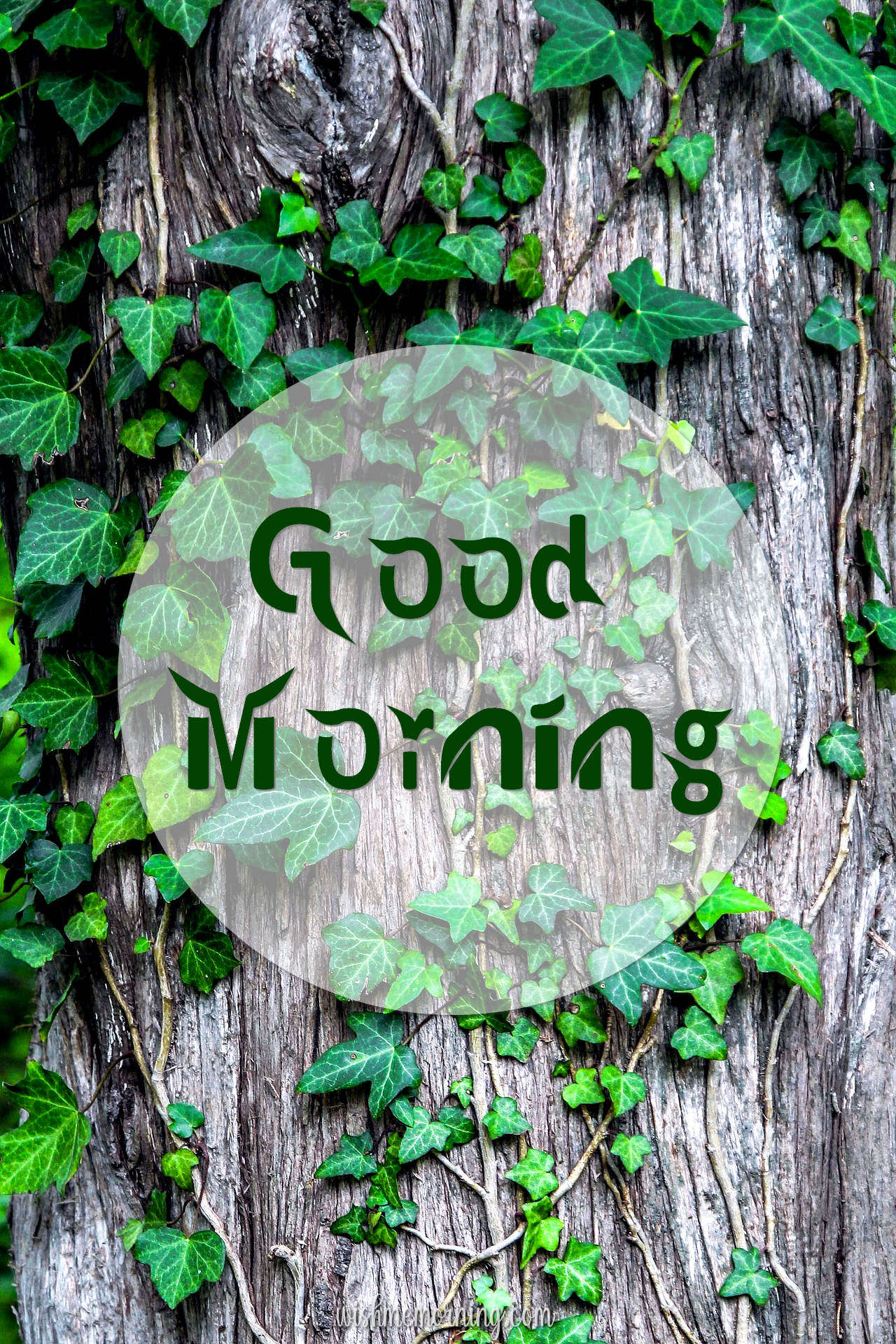 Beautiful Trees Woods Nature Images Wishes wishmemorning.com 12