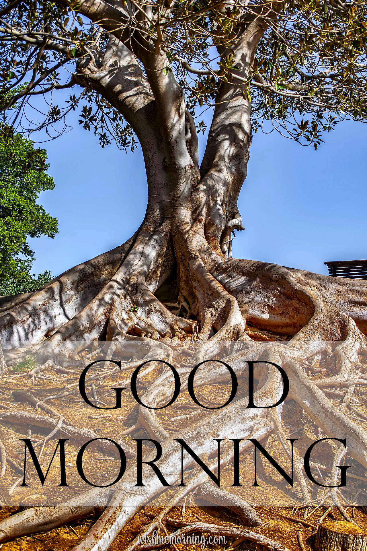Beautiful Trees Woods Nature Images Wishes wishmemorning.com 14