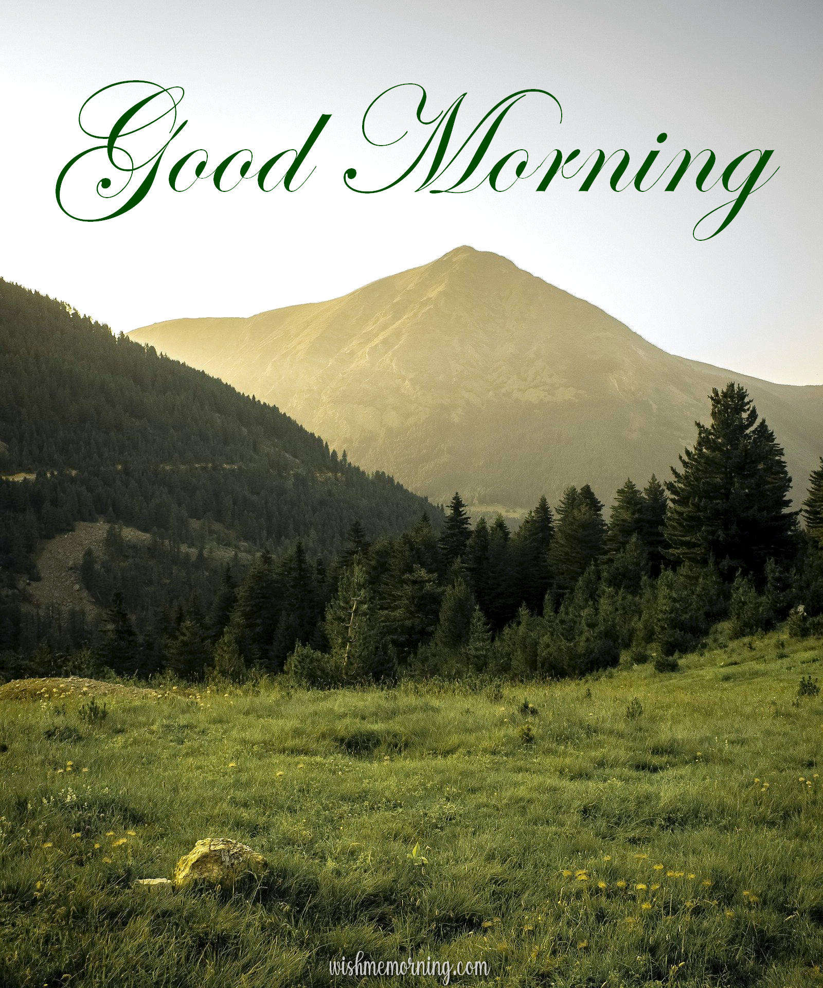 Beautiful Trees Woods Nature Images Wishes wishmemorning.com 17