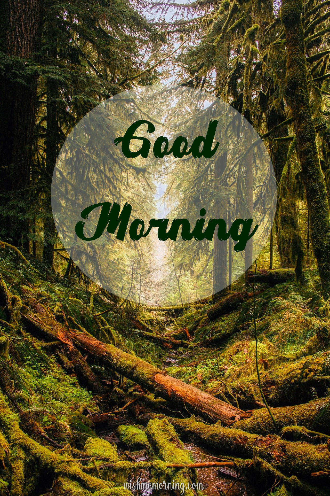 Beautiful Trees Woods Nature Images Wishes wishmemorning.com 18