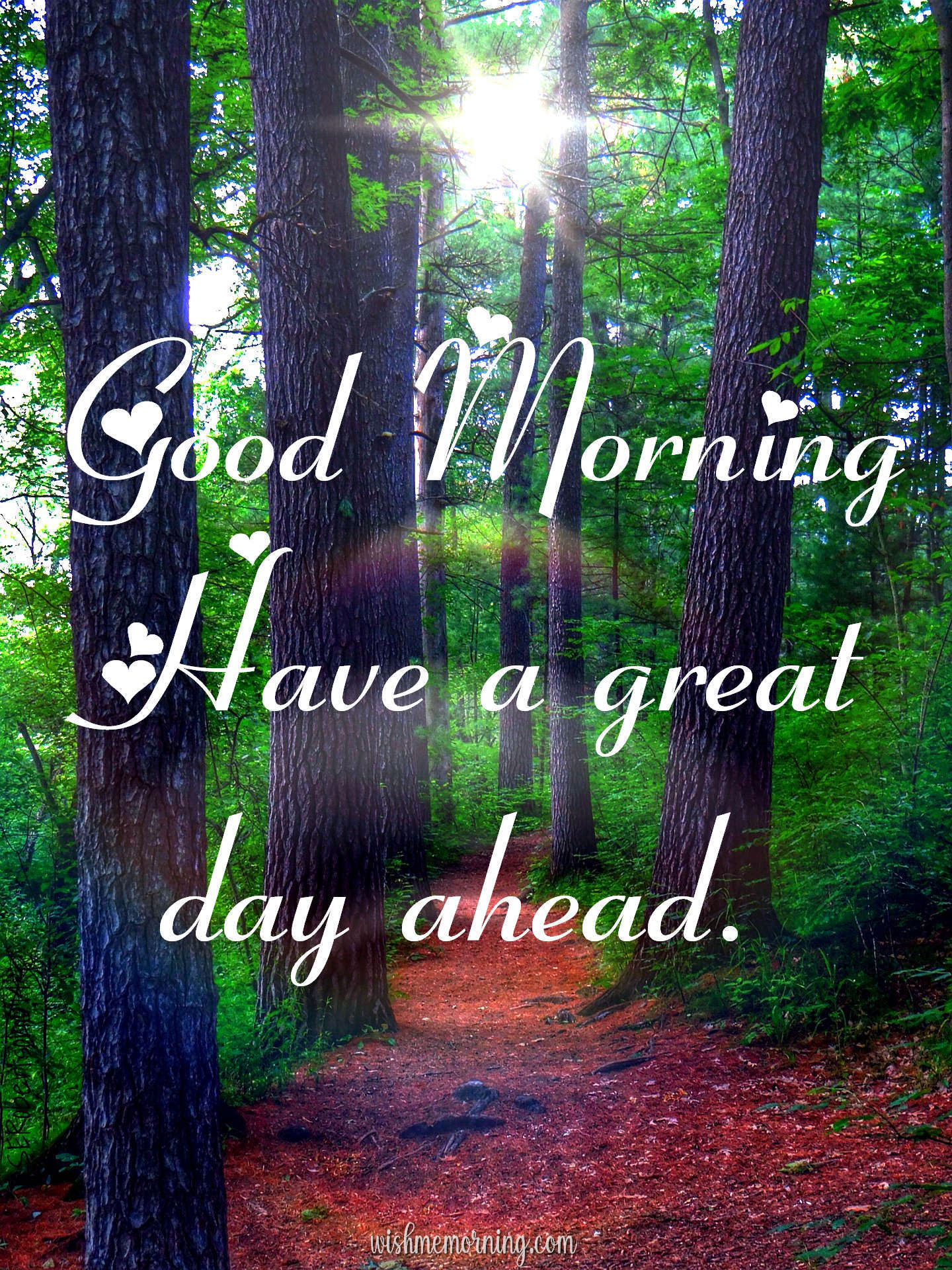 Beautiful Trees Woods Nature Images Wishes wishmemorning.com 19