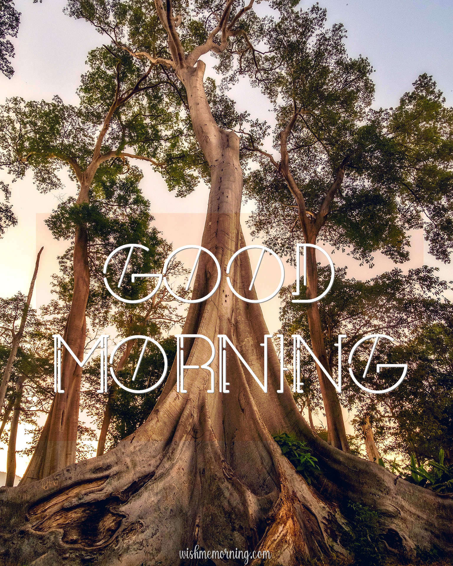 Beautiful Trees Woods Nature Images Wishes wishmemorning.com 24