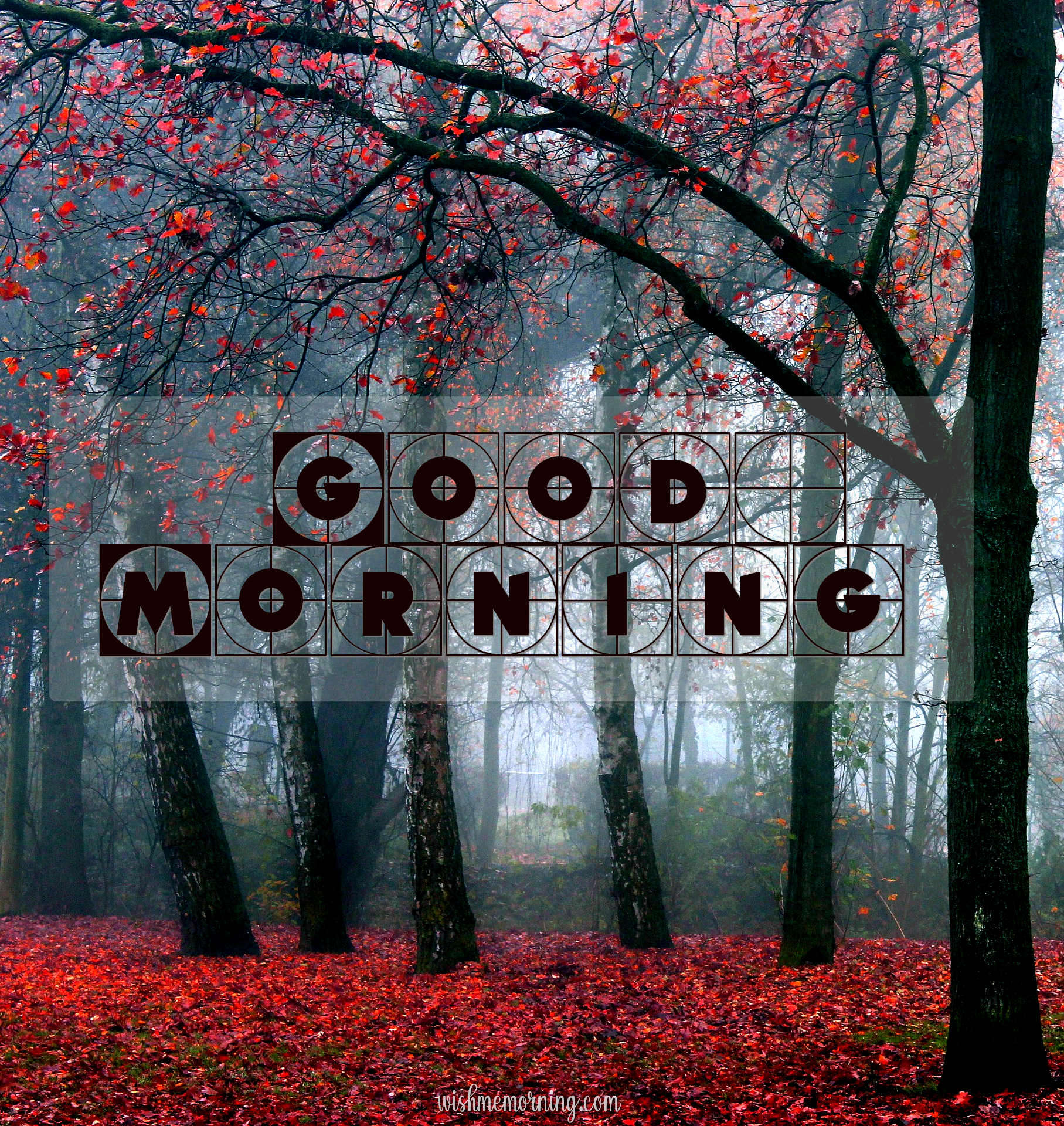 Beautiful Trees Woods Nature Images Wishes wishmemorning.com 4