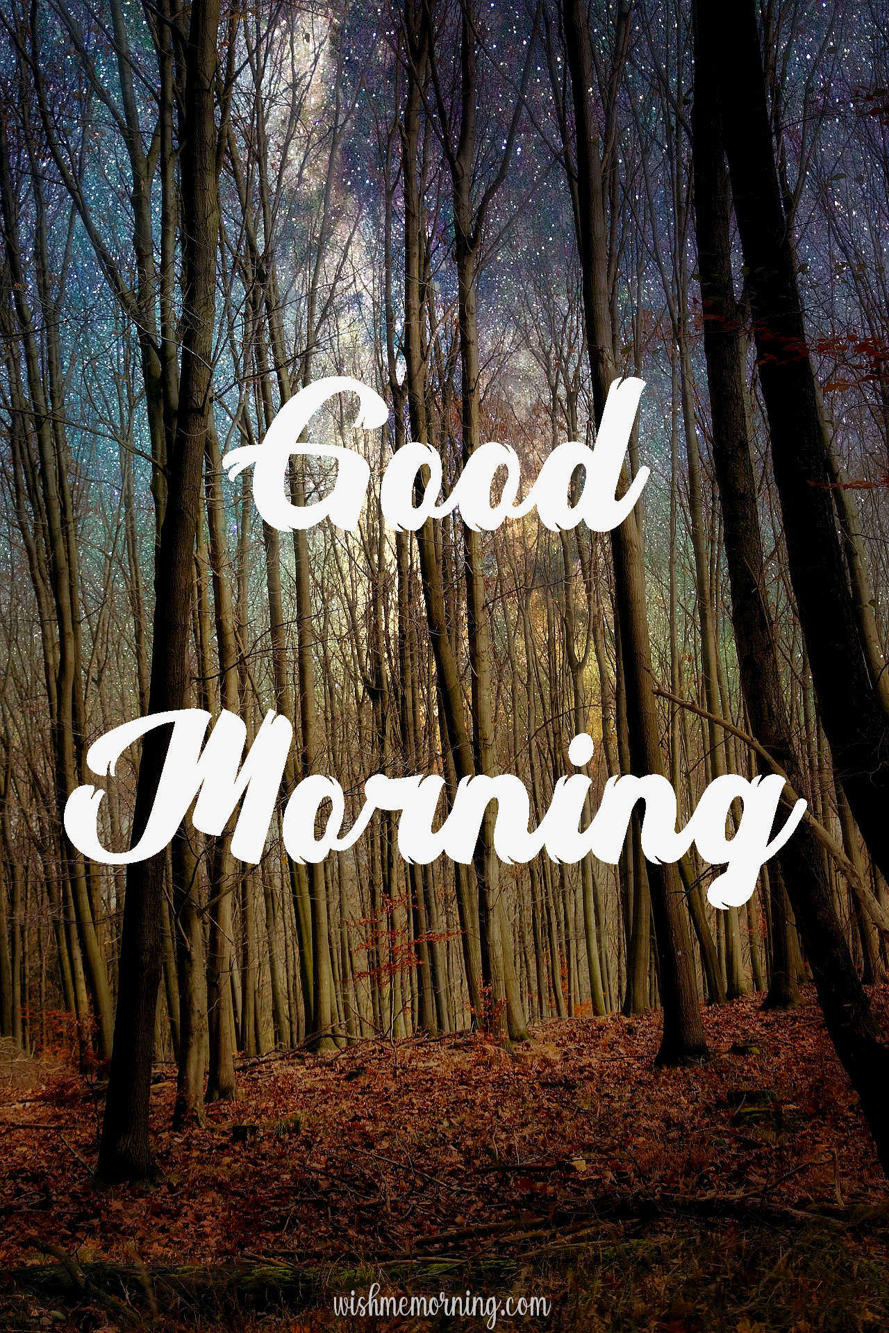 Beautiful Trees Woods Nature Images Wishes wishmemorning.com 8